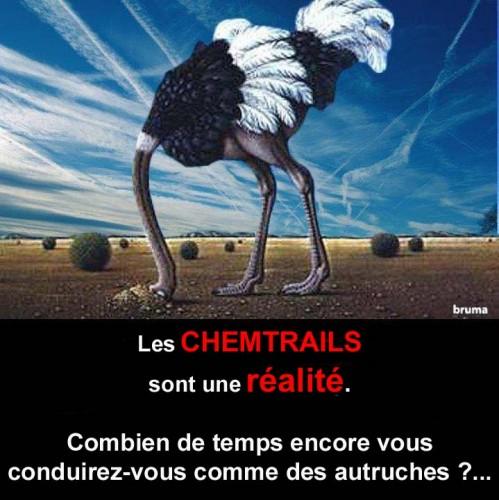 Chemtrails_autruche.2.jpg
